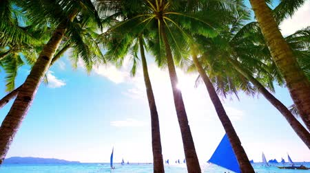 estância turística : Sailing boats floating at amazing sunny day in ocean waves near tropical beach with palm trees. Boracay island, Philippines Stock Footage