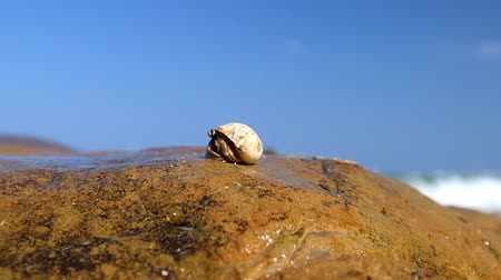rejtekhely : Hermit crab comes out of the shell tropical ocean beach
