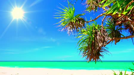 temporadas : Beautiful landscape with pandanus branches, seashore covered by white sand, washed by azure sea and lit by shining sun on clear blue sky. Vacation in tropical paradise concept. Camera stays still.