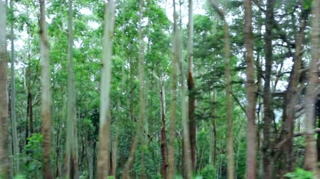 deep forest : Tracking video of dark dense tropical forest