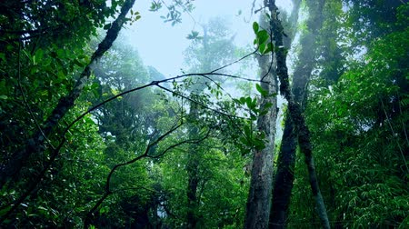 floresta tropical : Exotic trees covered with fog against cloudy sky on background. Mysterious forest overgrown with tropical plants and shrouded in mist. Foggy Malaysian rainforest. Bottom view. Camera stays still. Stock Footage