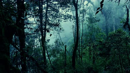 mossy forest : Surreal shot of grim exotic jungle covered with haze and overgrown with branched trees. Forbidden foggy forest full of interwoven tropical plants. Lush vegetation in gloomy rainforest.