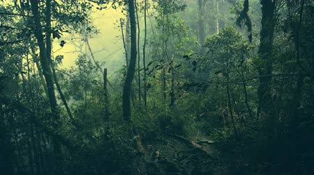 плотный : Gloomy tropical forest shrouded in mist and overgrown with shrubs and mossy trees. Sinister woods covered with fog. Frightening nature of somber Malaysian rainforest. Camera stays still. Стоковые видеозаписи