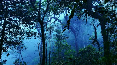 sűrű : Mysterious landscape with grim exotic jungle covered with fog. Enchanted foggy forest full of lush vegetation. Beautiful nature of gloomy Malaysian rainforest shrouded in mist. View from bottom to top