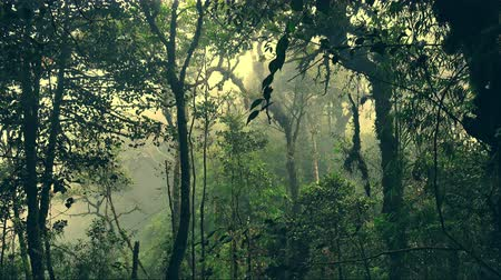 плотный : Mysterious landscape with grim exotic jungle covered with fog. Enchanted foggy forest full of lush vegetation. Beautiful nature of gloomy Malaysian rainforest shrouded in mist. Camera stays still.