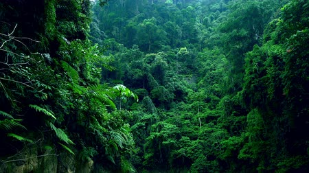 плотный : Bushy vegetation of shady woods. Dense thicket of exotic green plants growing on hillside. Mysterious tropical rainforest full of shrubs, ferns and trees. North Sumatra, Indonesia.