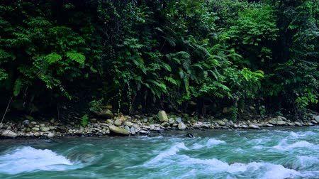 плотный : Massive thickets of fern overhanging purling mountain river with stony banks. Enchanting scenery of wild tropical flora and fast flowing stream with rapids. Camera zooms out. North Sumatra, Indonesia.