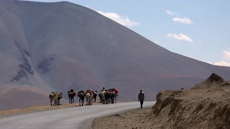 Bikers riding motorcycles past group of packhorses walking along Leh-Manali Highway against Himalaya mountain. Motorcyclists on bikes passing by caravan of sumpter horses on road. Ladakh, India