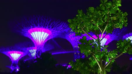 SINGAPORE - OCT 20, 2017: Fantastic night view of Supertree Grove of Gardens by the Bay. Giant futuristic super trees illuminated by purple light. Astonishing touristic landmark. Camera zooms out.