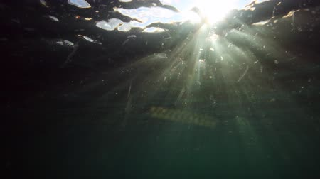 hínár : Underwater view of sunlight rays shining into ocean filled with jellyfish