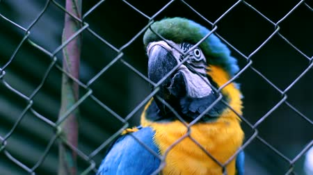 animais :  Blue Macaw in booking Iguazu Falls. Argentina.