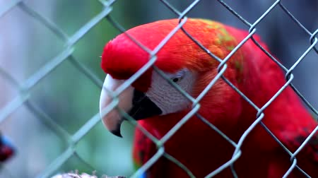 escarlate : Red Macaw in booking Iguazu Falls. Argentina.