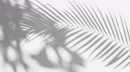 varenblad : closeup the motion of shadow palm leaves with blowing wind on a white wall background. Stockvideo