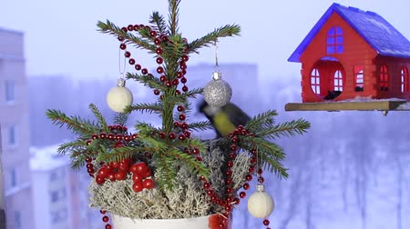 feeder : Christmas video footage with the birds. Stock Footage