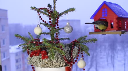 besleyici : Christmas video footage with the birds. Stok Video