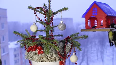karmnik : Christmas video footage with the birds. Wideo