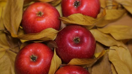 pomar : Red apples among yellow leaves