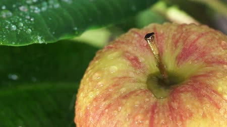 nemli : Beautiful green apple with water drops