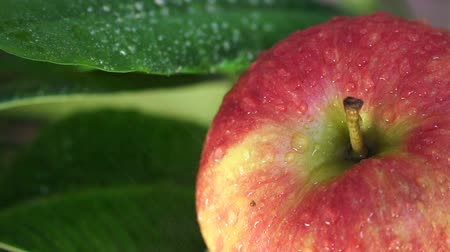 nemli : Red, Ripe Apple Watered