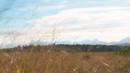 Slow pan over grassy African field with mountains in the distance