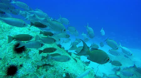 branqueamento : Swim along with a large school of fish while diving in the Seychelles Vídeos