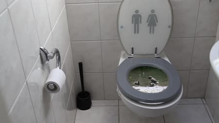 toilets : Water Pollution