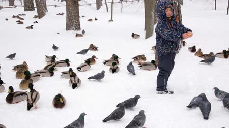 Saratov  Russia - March 8, 2018: The boy feeds the wild ducks in the city Park. Winter day.