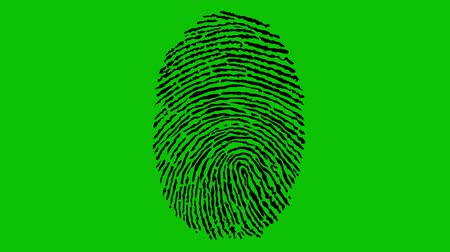 impressão digital : Various Fingerprints Running on Green Screen. 4K
