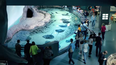 Moscow, Russia - October, 2019: Visitors of Moscow oceanarium. Aquarium interior view Dostupné videozáznamy