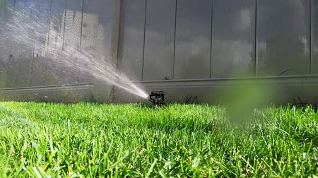 irrigate : Oscillating lawn sprinkler watering grass in backyard automatic irrigation system Stock Footage