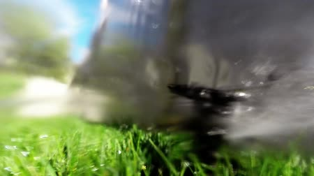 gramado : Oscillating lawn sprinkler watering grass in backyard automatic irrigation system Stock Footage