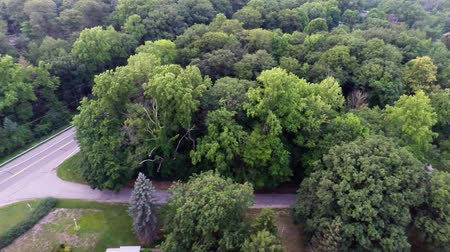 árvores : Aerial view of green forest treetops
