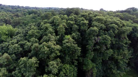 natura : Aerial view of green forest treetops