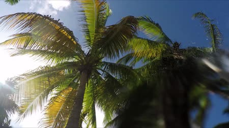 jamaica : Looking up at palm trees floating in pool lazy river Stock Footage