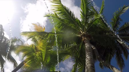 jamajka : 4k Looking up at palm trees floating in pool lazy river