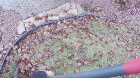 sıkıcı iş : Raking fall leaves in backyard with fan rake