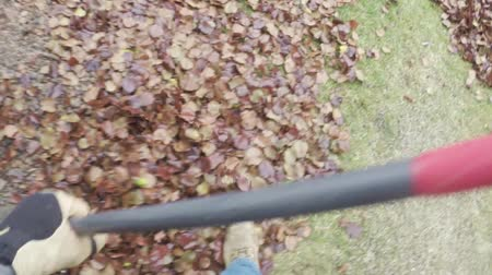 sıkıcı iş : Yard work raking autumn leaves on lawn Stok Video