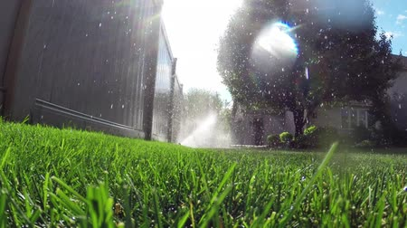 trawnik : Oscillating lawn sprinkler watering grass in backyard Wideo