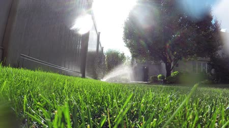 gramado : Garden automatic irrigation system watering lawn            Oscillating lawn sprinkler watering grass in backyard Stock Footage