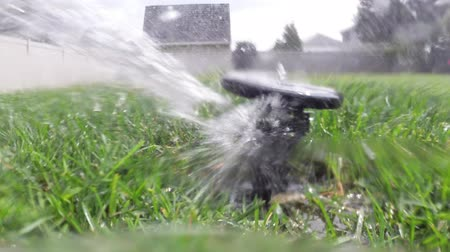 trawa : Oscillating lawn sprinkler watering grass in backyard Wideo