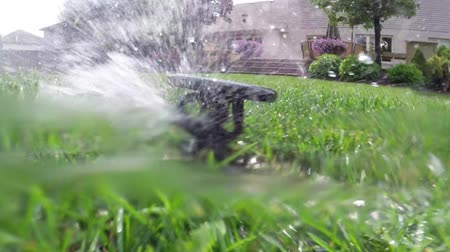 irrigate : Oscillating lawn sprinkler watering grass in backyard Stock Footage
