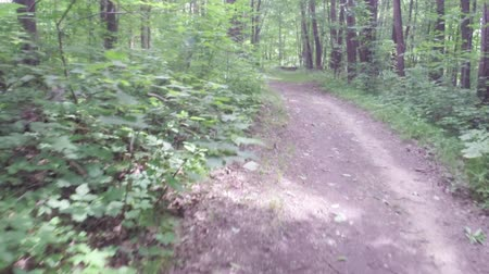 natura : Hikers traveling along dirt footpath in green summer forest - Travel and adventure concept Wideo