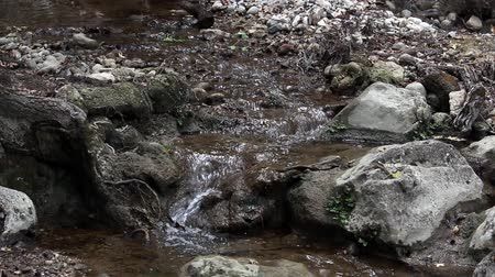 mohás : Forest stream in the rock