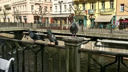 nyáj : Pigeons taking off on the railing of the old waterfront on a sunny day, slow motion Stock mozgókép