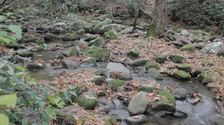 füstös : tracking along a small mountain stream with scattered rocks and autumn fallen leaves