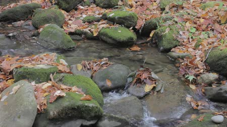 füstös : mountain stream with scattered rocks and autumn fallen leaves