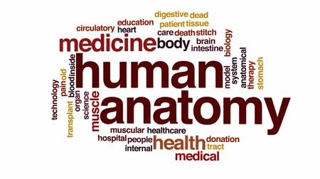 adomány : Human anatomy animated word cloud, text design animation.