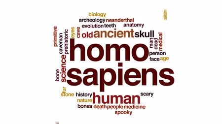 idade média : Homo sapiens animated word cloud, text design animation.