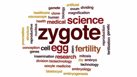 dividing : Zygote animated word cloud, text design animation. Stock Footage