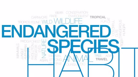 toad : Endangered species animated word cloud, text design animation. Kinetic typography.
